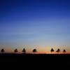 crepuscule july