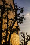 壁と木と夕暮れのトリオ