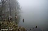 霧の湖畔2