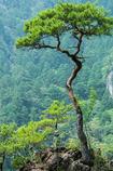 鳳来寺山一景