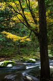 秋のひとこま2
