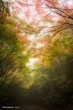 秋彩の誘い