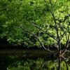 Green light tree