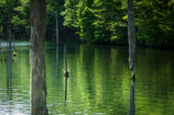 初夏の水面