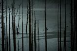 雨の自然湖4