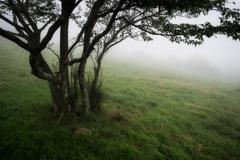 ひとりぼっちの木