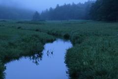 朝の大江湿原 2
