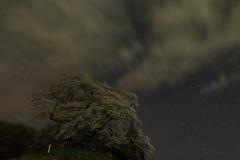 発知のヒガンザクラ夜空に咲く 2
