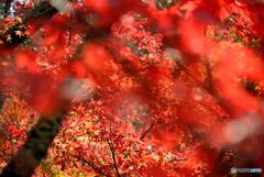 山寺での紅葉