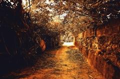 原風景の小道