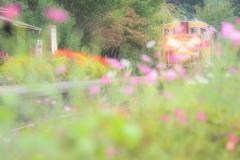 秋ですね、、、(*^-^*)