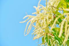 栗の花とみのむしくん♪