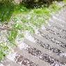 桜散る階段