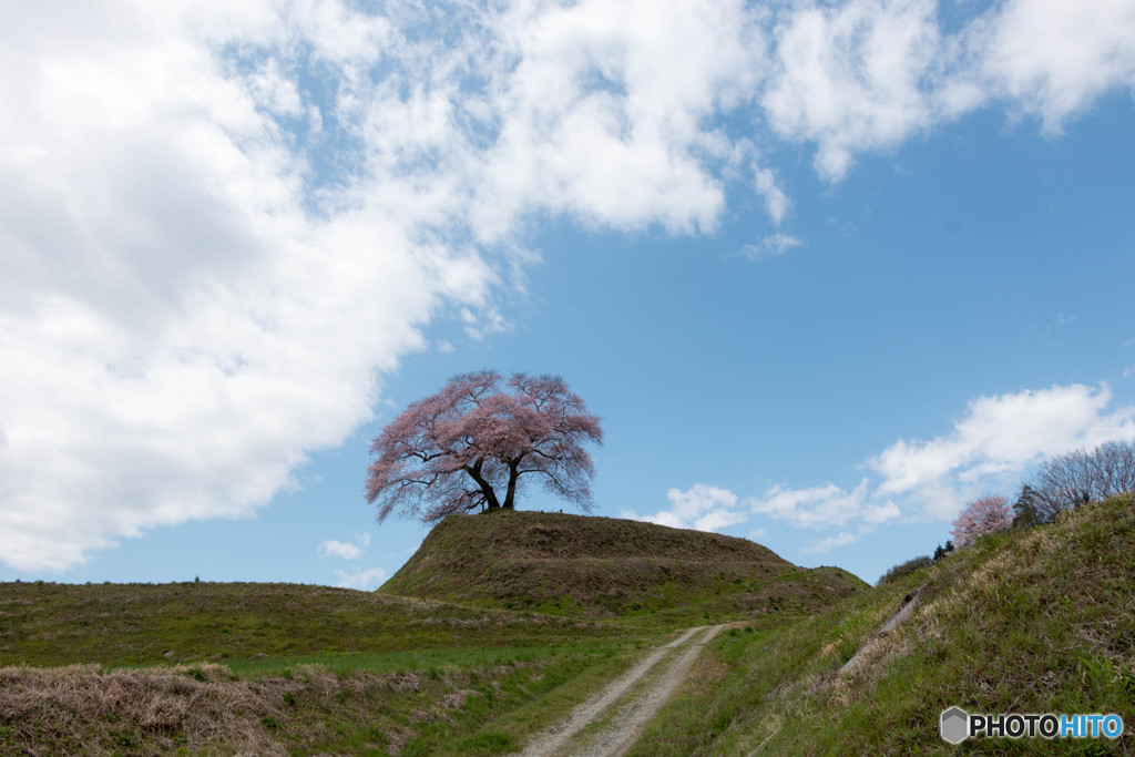 青空と平堂壇の桜