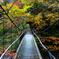 紅葉広がる吊橋