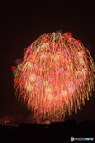 尺玉の中の千輪菊