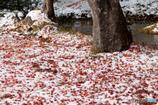 落ち葉の絨毯?