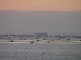 浮島現象 上島 播磨灘2