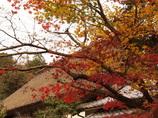 里の秋 慈眼寺 三木