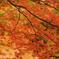 紅葉1 兵庫 加西