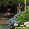 白山神社2 文京区