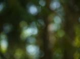 森の中でぶら下がる毛虫