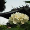 白山神社1 文京区