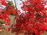 里の秋 石峯寺 神戸淡河