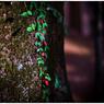 SONY ILCE-7Sで撮影した(「小さな秋」 小江戸川越散歩99)の写真(画像)