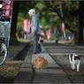 NIKON NIKON Dfで撮影した(「とおりゃんせ」 小江戸川越散歩95)の写真(画像)
