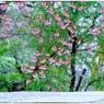 NIKON NIKON D5で撮影した(「なごり雪」 小江戸川越散歩156)の写真(画像)