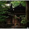 NIKON NIKON D3で撮影した(「宝雨」 小江戸川越散歩133)の写真(画像)