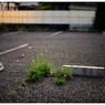 NIKON NIKON Dfで撮影した(「見た目じゃわからない事」小江戸川越散歩121)の写真(画像)