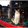 NIKON NIKON Dfで撮影した(「レッドカーペット」 小江戸川越散歩159)の写真(画像)