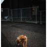 NIKON NIKON D3Sで撮影した(「夕暮れの猫くん」川越散歩 50)の写真(画像)