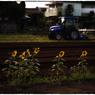 NIKON NIKON Dfで撮影した(「夏の終わりに」小江戸川越散歩83)の写真(画像)