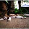 SONY ILCE-7Sで撮影した(猛暑な週明け)の写真(画像)