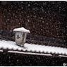 NIKON NIKON D5で撮影した(「みんな雪の中04」小江戸川越散歩142)の写真(画像)