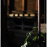 NIKON NIKON Dfで撮影した(「春の足跡 小江戸川越散歩65)の写真(画像)
