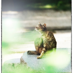 NIKON NIKON Dfで撮影した(「夏の気配」 小江戸川越散歩114)の写真(画像)