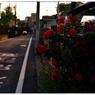 NIKON NIKON Dfで撮影した(「かえり道」小江戸川越散歩131)の写真(画像)