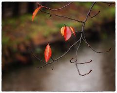 「11月6日」小江戸川越散歩210