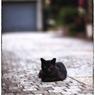 NIKON NIKON D3で撮影した(川越散歩 47)の写真(画像)