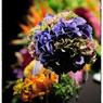 NIKON NIKON D3Sで撮影した(結婚式の写真 29)の写真(画像)