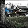 NIKON NIKON D90で撮影した(「道草」小江戸川越散歩92)の写真(画像)