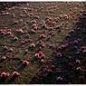 NIKON NIKON Dfで撮影した(「春も過ぎたから」小江戸川越散歩123)の写真(画像)
