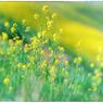 NIKON NIKON D4Sで撮影した(「春の色」 小江戸川越散歩74)の写真(画像)