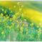 「春の色」 小江戸川越散歩74