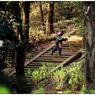 NIKON NIKON D5で撮影した(「葉桜の頃」小江戸川越散歩157)の写真(画像)
