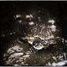 NIKON NIKON D4Sで撮影した(「雨の日の亀くん」 小江戸川越散歩90)の写真(画像)